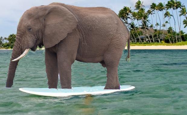 ElephantSUP2